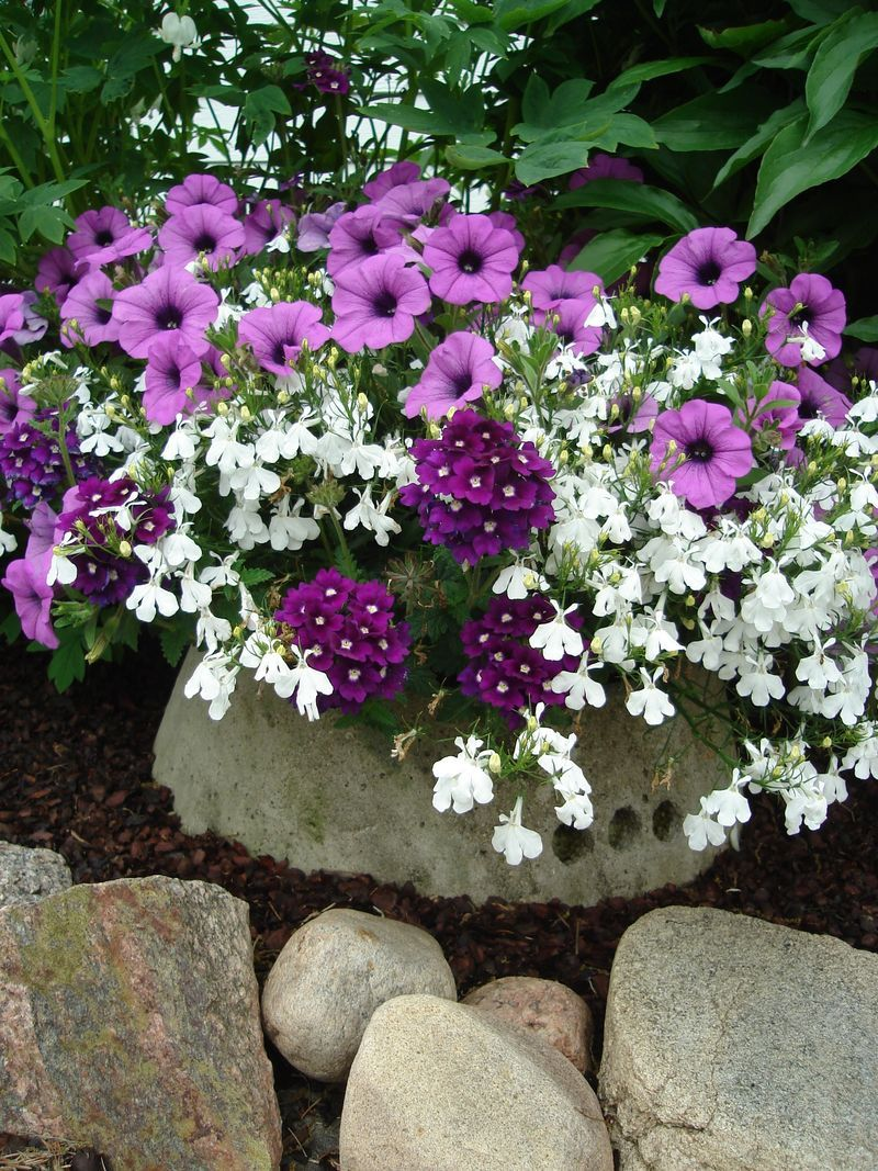 Pretty Combination Of Purple And White Container Flower Gardening
