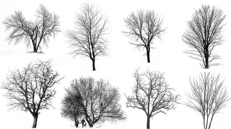 Winter Tree Silhouette Google Zoeken Architectural Trees Tree Drawing Snow Illustration