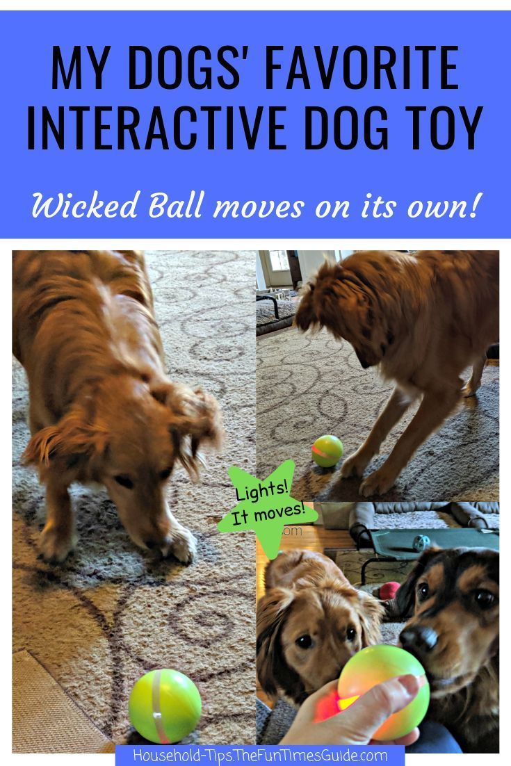 Info's : The Wicked Ball Dog Toy Is One Of The Best Interactive Dog Toys To Prevent Dog Boredom - It's...
