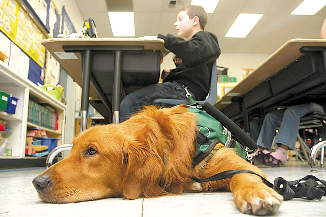 Kegan And Everett At School Service Dogs Autism Service Dogs Service Animal