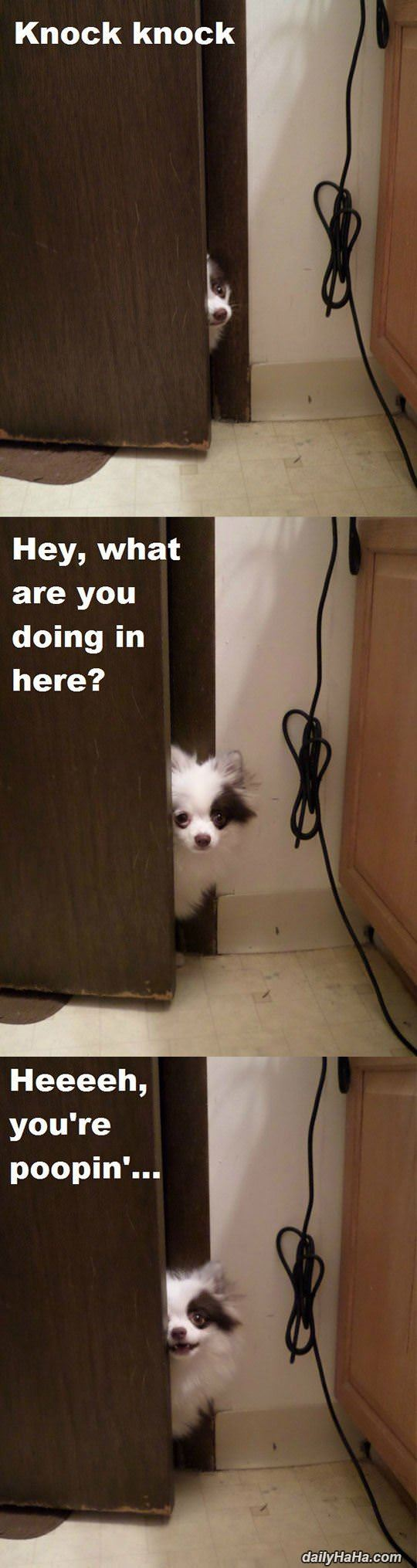 What You Doing In Here Funny Animals Funny Animal Pictures Cute Funny Animals