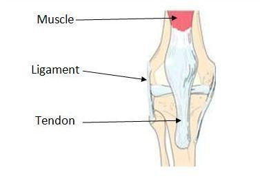 Osteoarthritis Schulterübungen