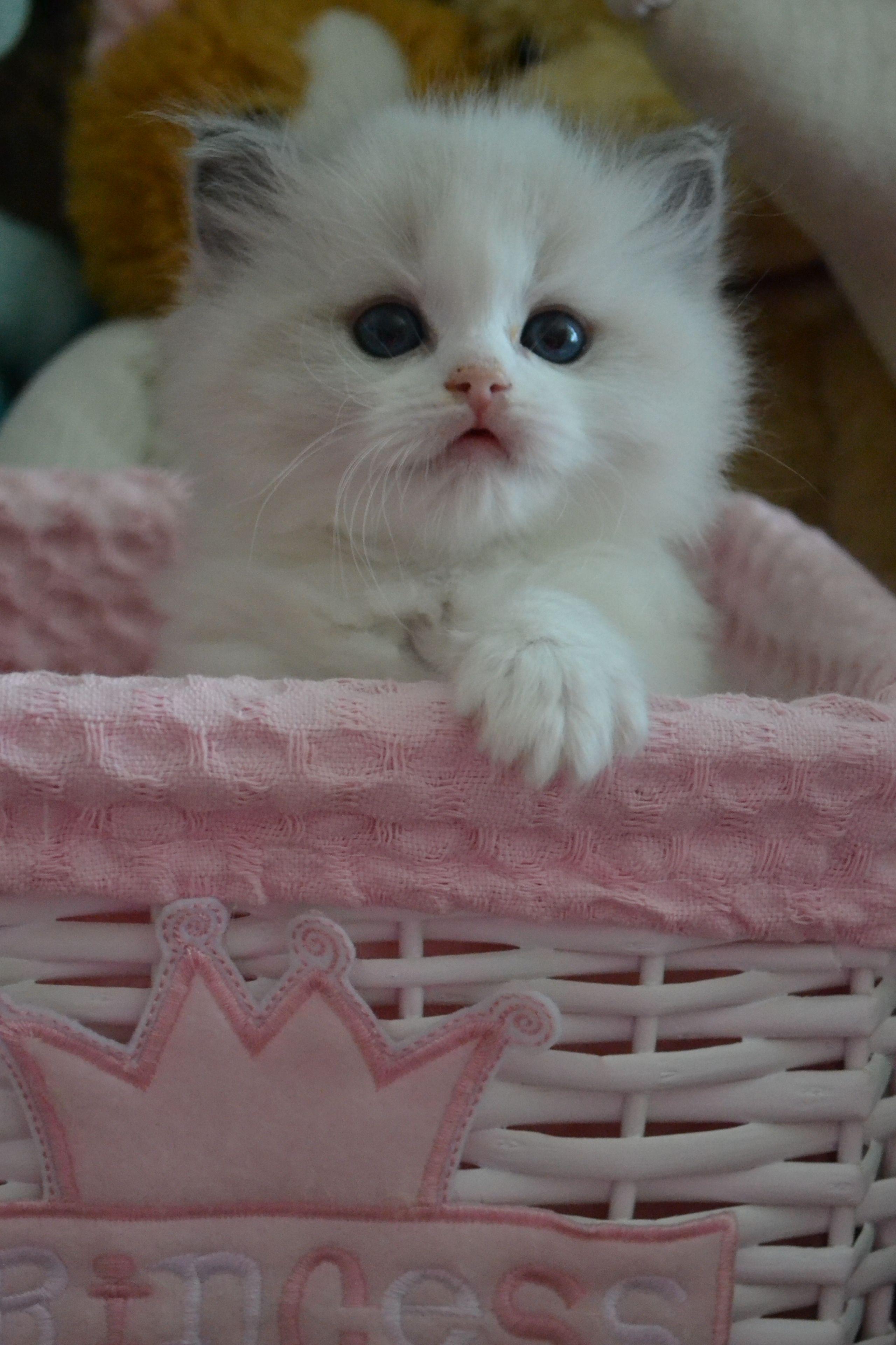Kittens cutest, Cute cats, Cats