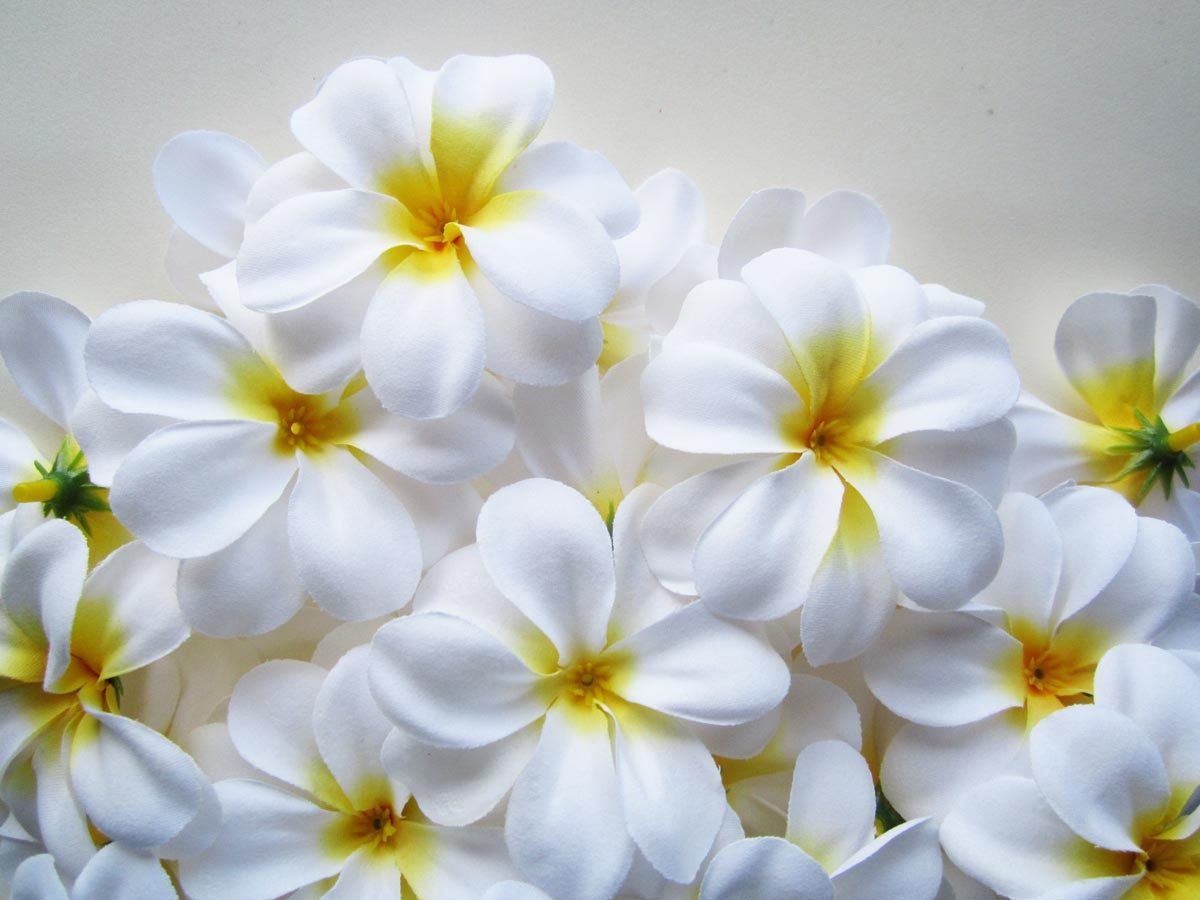 100 White Plumeria Frangipani Heads Artificial Silk Flower 3 Inches Wholesale Lot For Wedding Work Make Hair Clips Headbands Hats Artificial Silk Flowers Floral Supplies Wholesale Silk Flowers