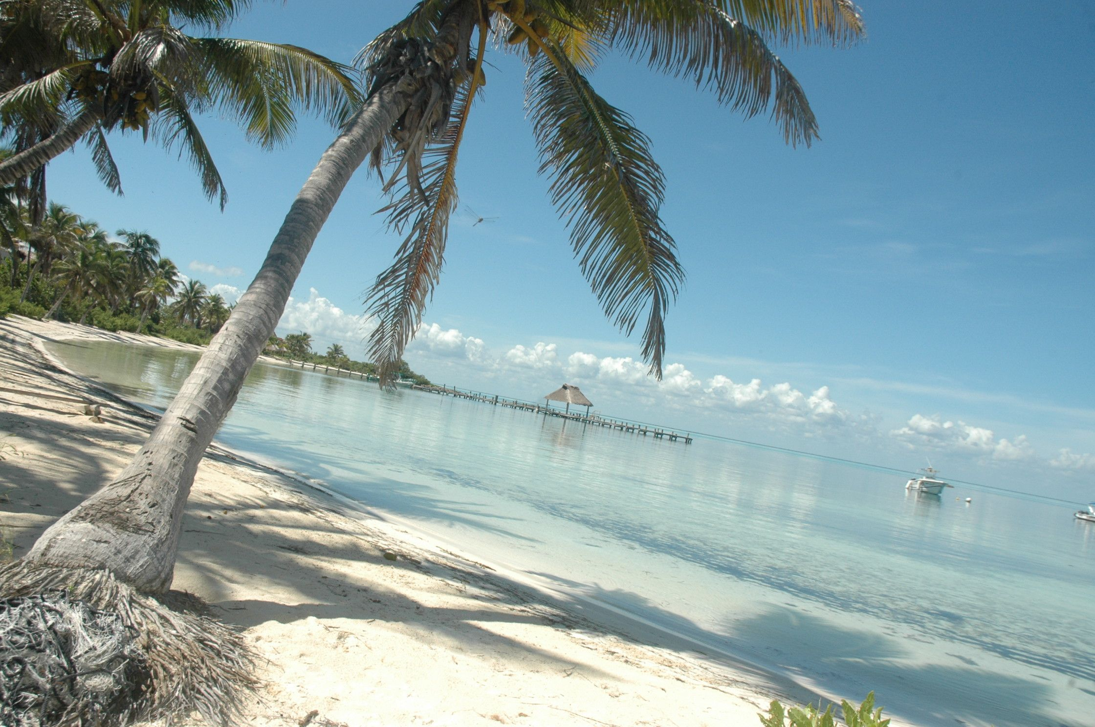 Caribbean Beach Scenes: Pin By Definitive Caribbean On Beach Scene