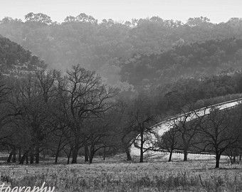Cedar Smoke Fine Art Photography Black And White Landscape Texas Hill Country Cedar Tree Smokey Winter Lan Landscape Winter Landscape Black And White Landscape