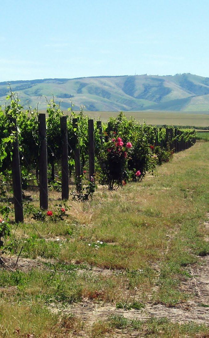 Palouse Winery | Travel | Vacation Ideas | Road Trip | Places to Visit | Vashon | WA | Distillery | Wine