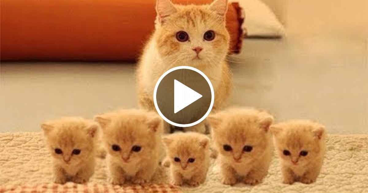 So Many Cute Kittens Videos Compilation 2018 Viral Chop Video