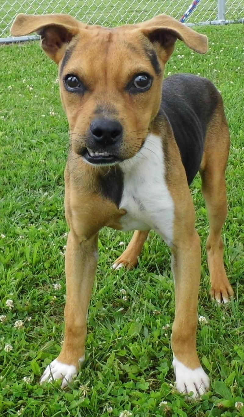 Adopt Roger on Shelter dogs, Pet adoption, Adoption