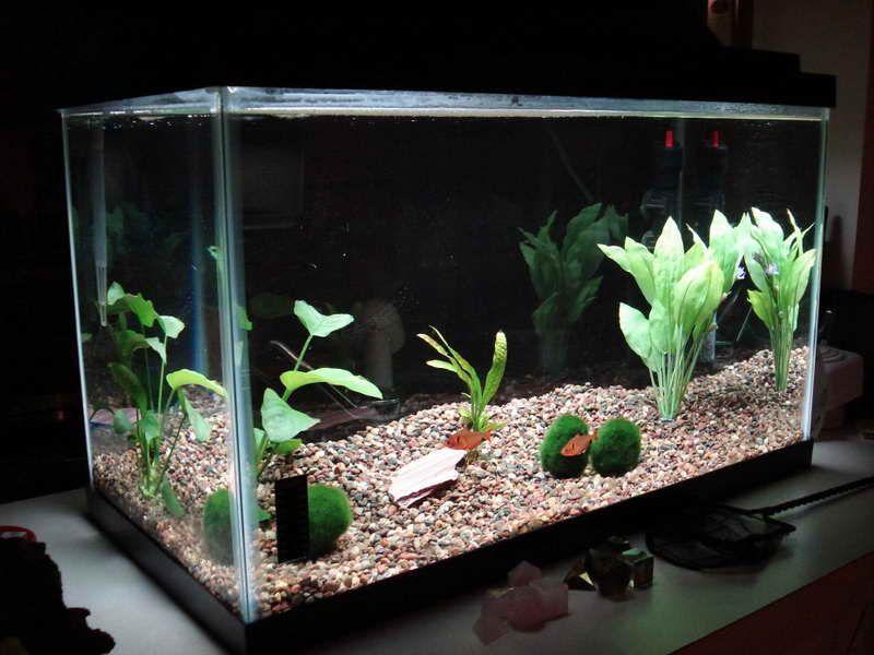 Cool Aquarium Decorations With Simple Design Cheap Aquariums