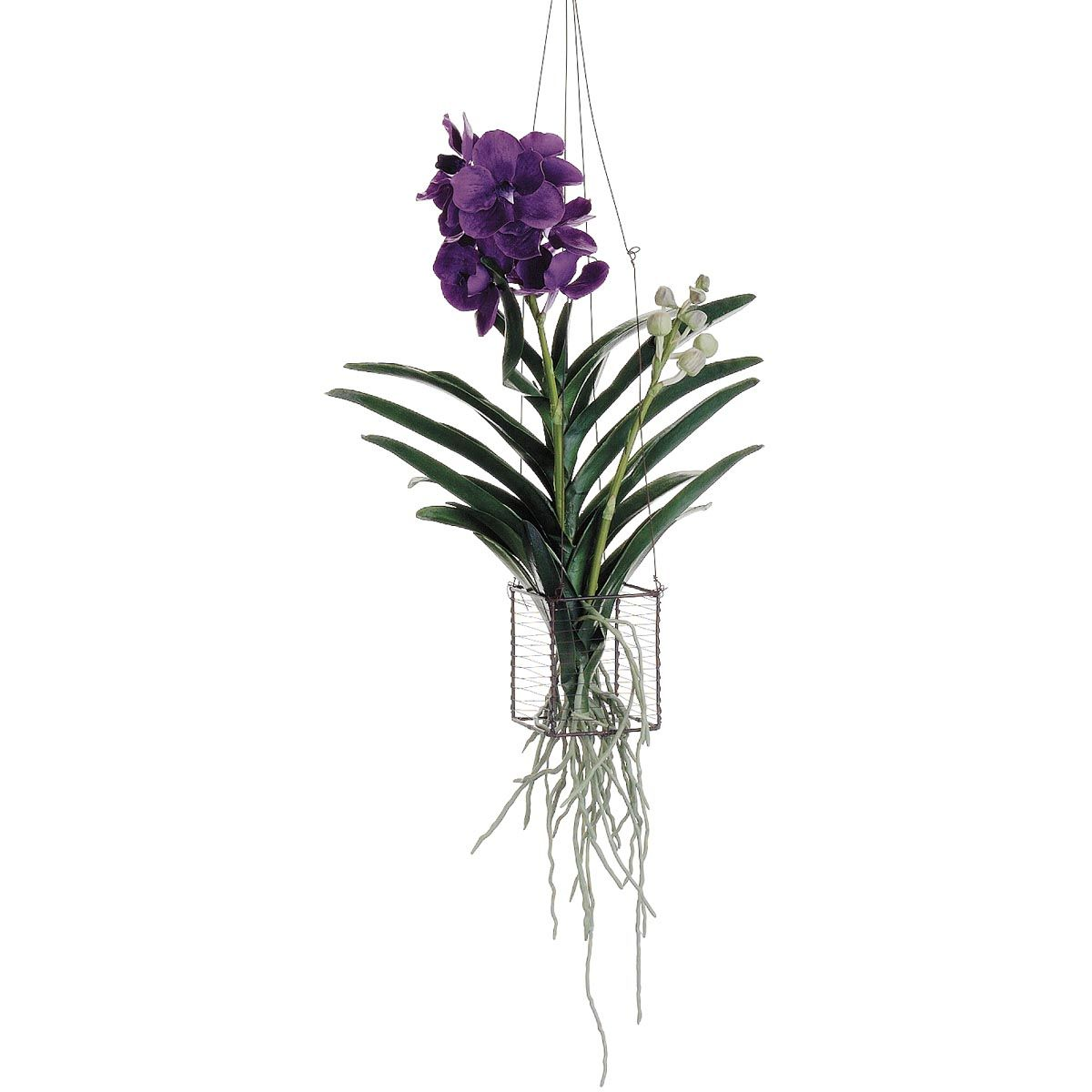 30 inch vanda orchid hanging plant in wire basket vanda for How to hang flowers