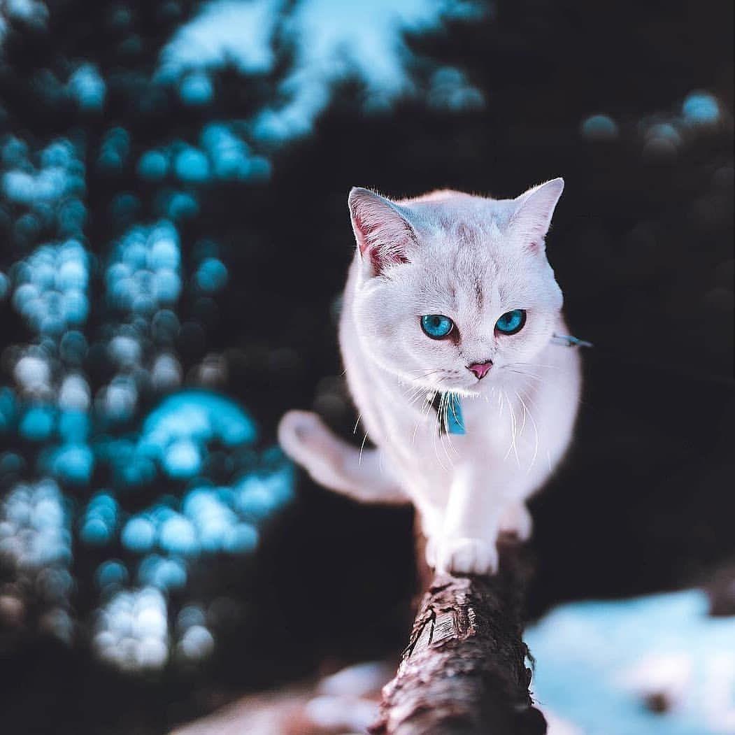 Dogaustu Manzaralarさんはinstagramを利用しています Manzara Earthofficial Natureshots Nature Perfection Photoarena Nature Yoursho Pretty Cats Cats Cute Animals