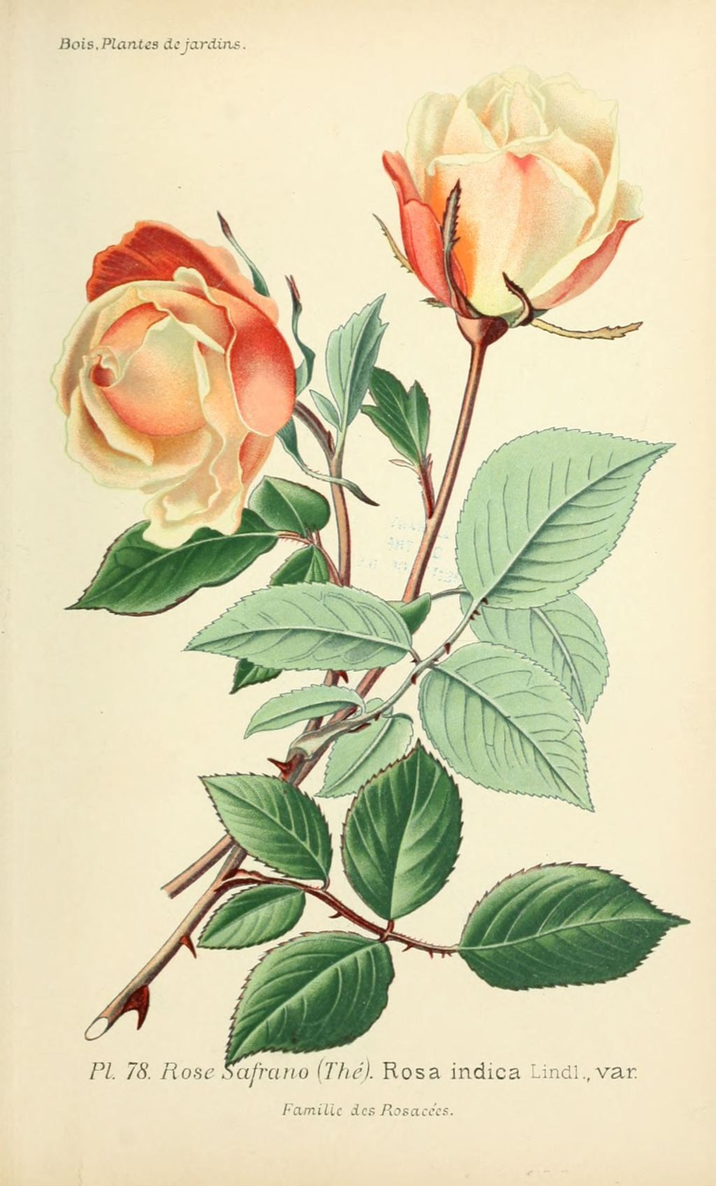 épinglé Par Amina Konukhova Sur Botanical Prints En 2019