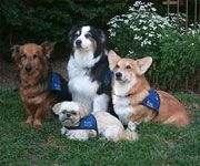 Four animal assisted therapy dogs