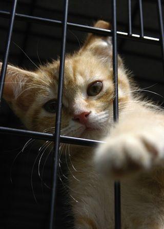 How To Adopt A Cat At Petsmart Animales Bonitos Gatos Animales