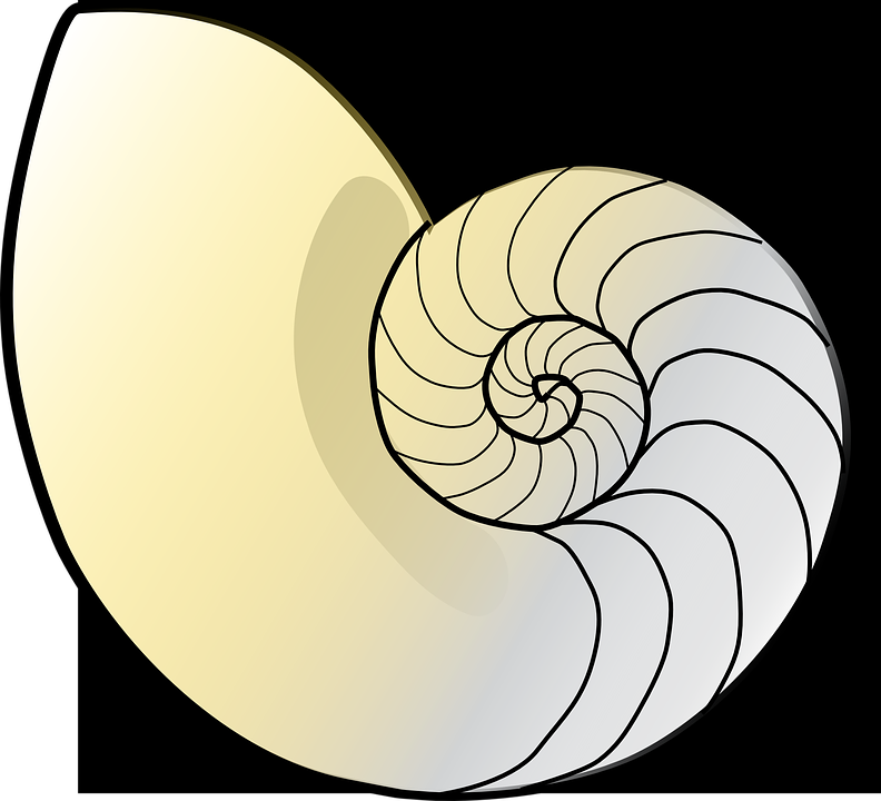 Спираль фибоначчи картинки
