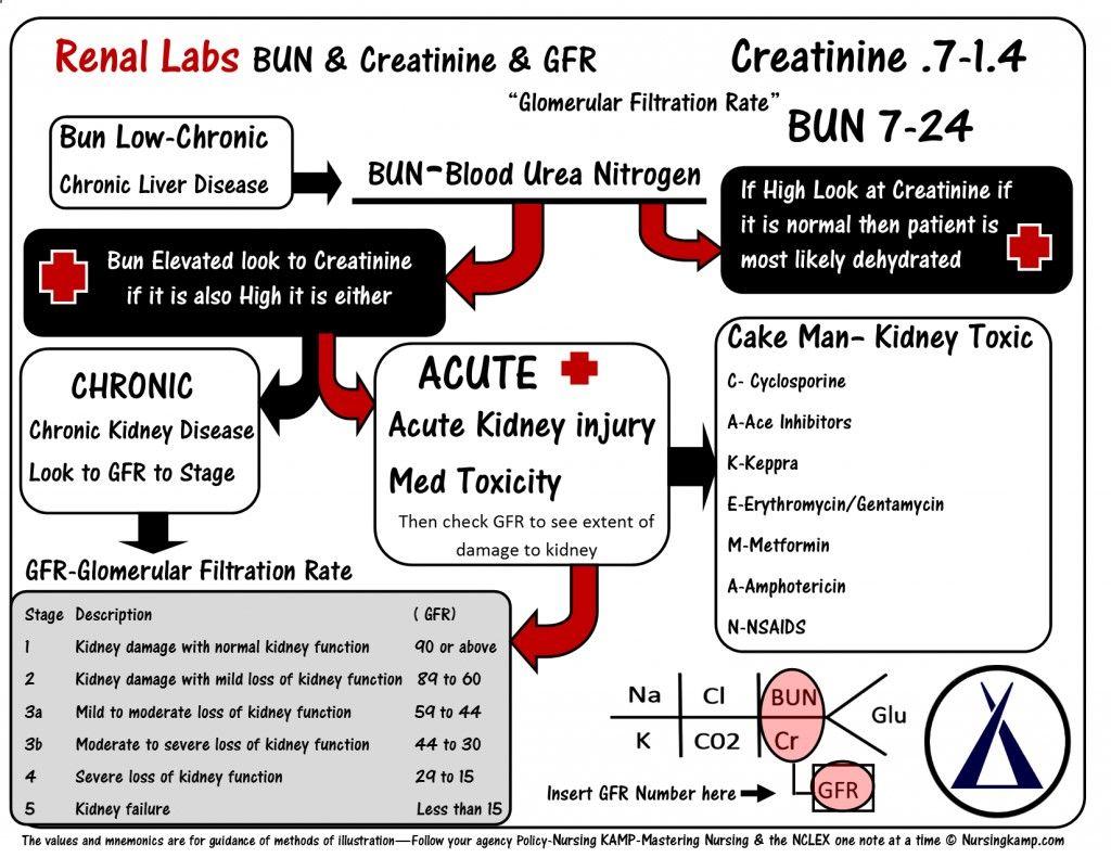 Bun Creatinine Kidney Disease Acute Renal Failue Labs Potassium Hyperkalemia Hypokalemia