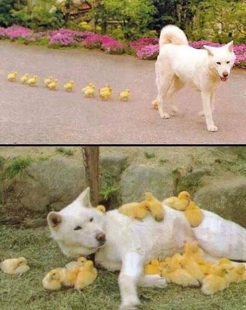 #beautiful #macheosei #buonweekend #instagram #animal #dog #bellissimo #白白 #討捏捏 #狗 #過動 #xd #doll #yolo #horny #lol #bitch #we #sweet #rest #three #insta #walk #friends #likeit #cool #hah #rex #look #silpo