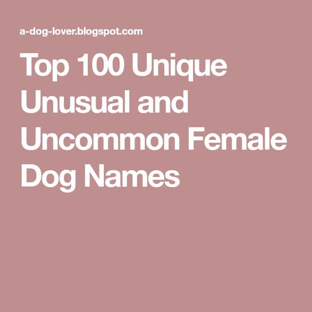 Top 100 Unique Unusual And Uncommon Female Dog Names