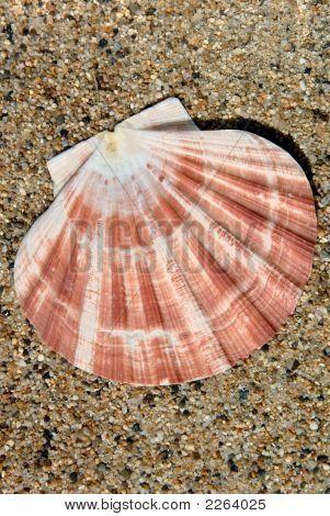 Bivalve Sea Shell on Sand in Sunshine poster