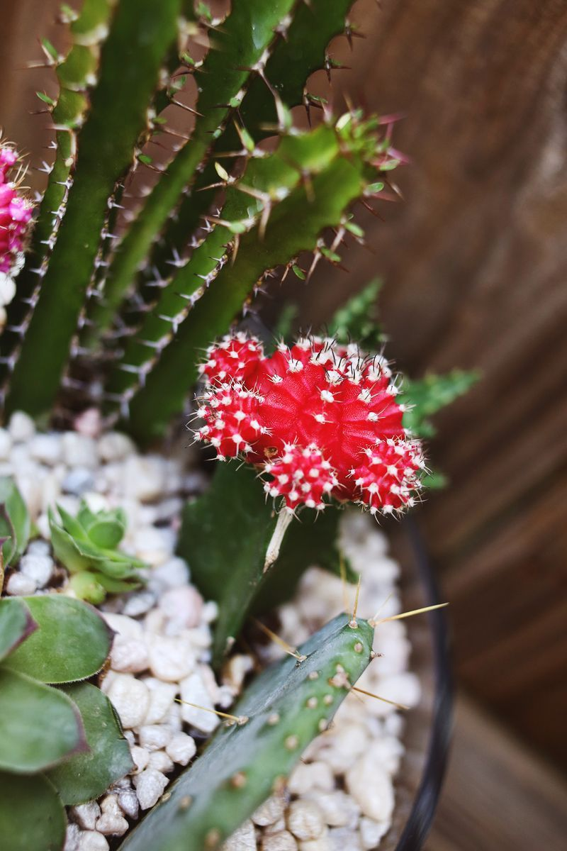 Photo of Planting A Simple Cacti Garden – A Beautiful Mess