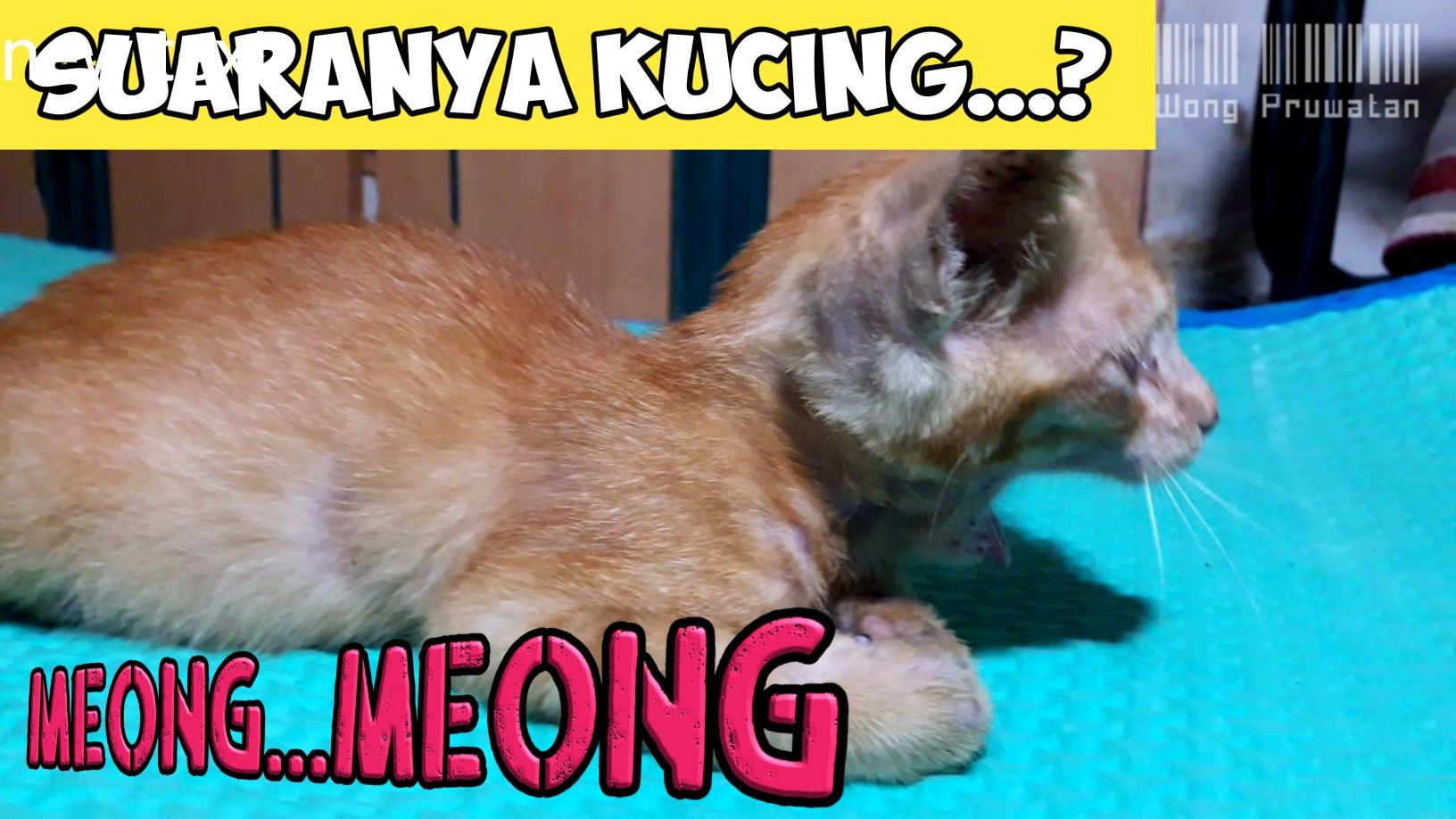 Suara Kucing Pikat Kucing Lainnya Animals Dogs Make It Yourself
