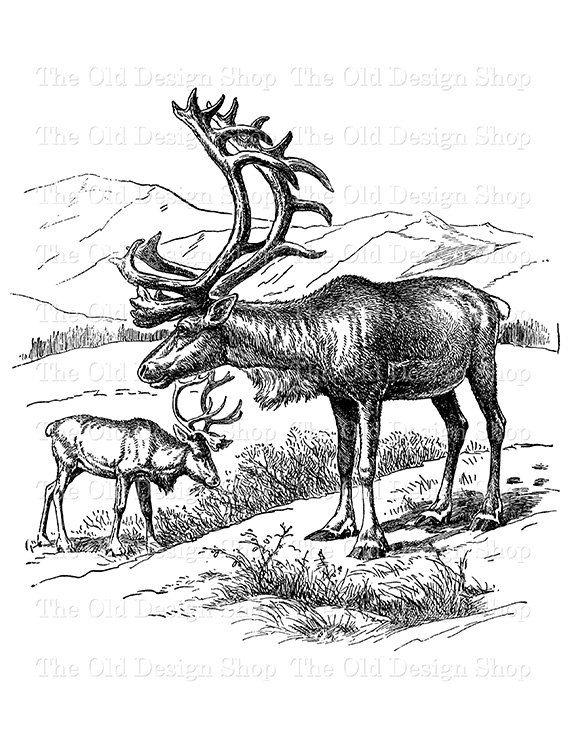 Reindeer Clip Art Vintage Animal Illustration Commercial ...