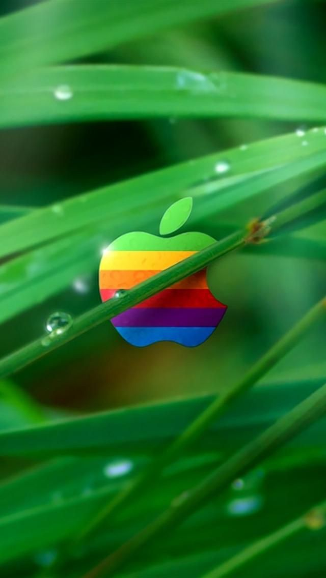Color Apple In Grass IPhone 5 Wallpapers HD
