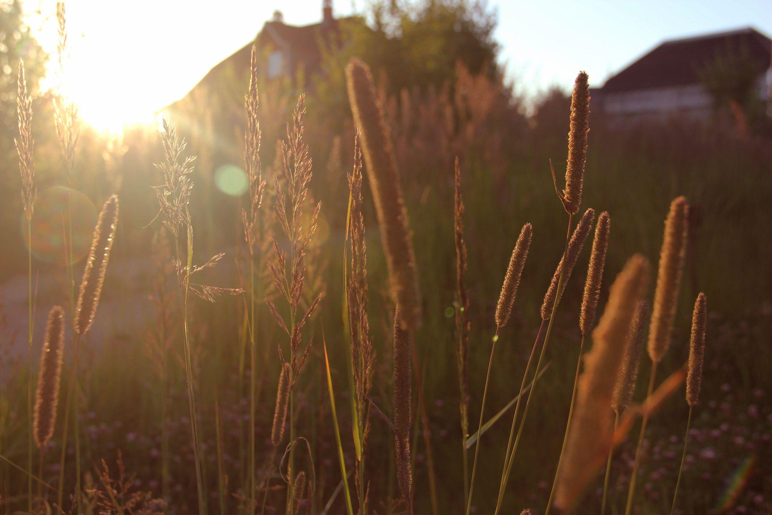 sundown by Kate Kochkina