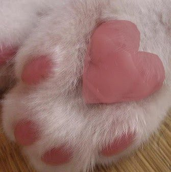 heart on cat paw more pins under www.supondo.com