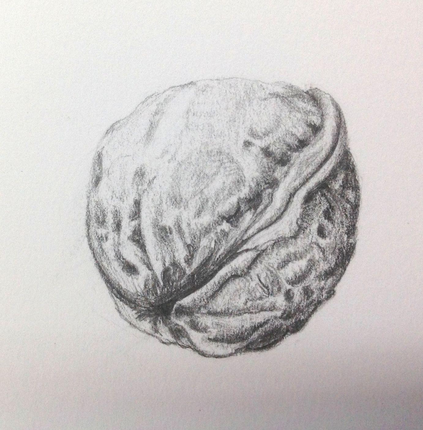 Грецкий орех рисунки