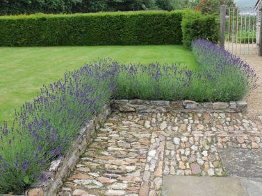 Plants for the Formal Garden Style