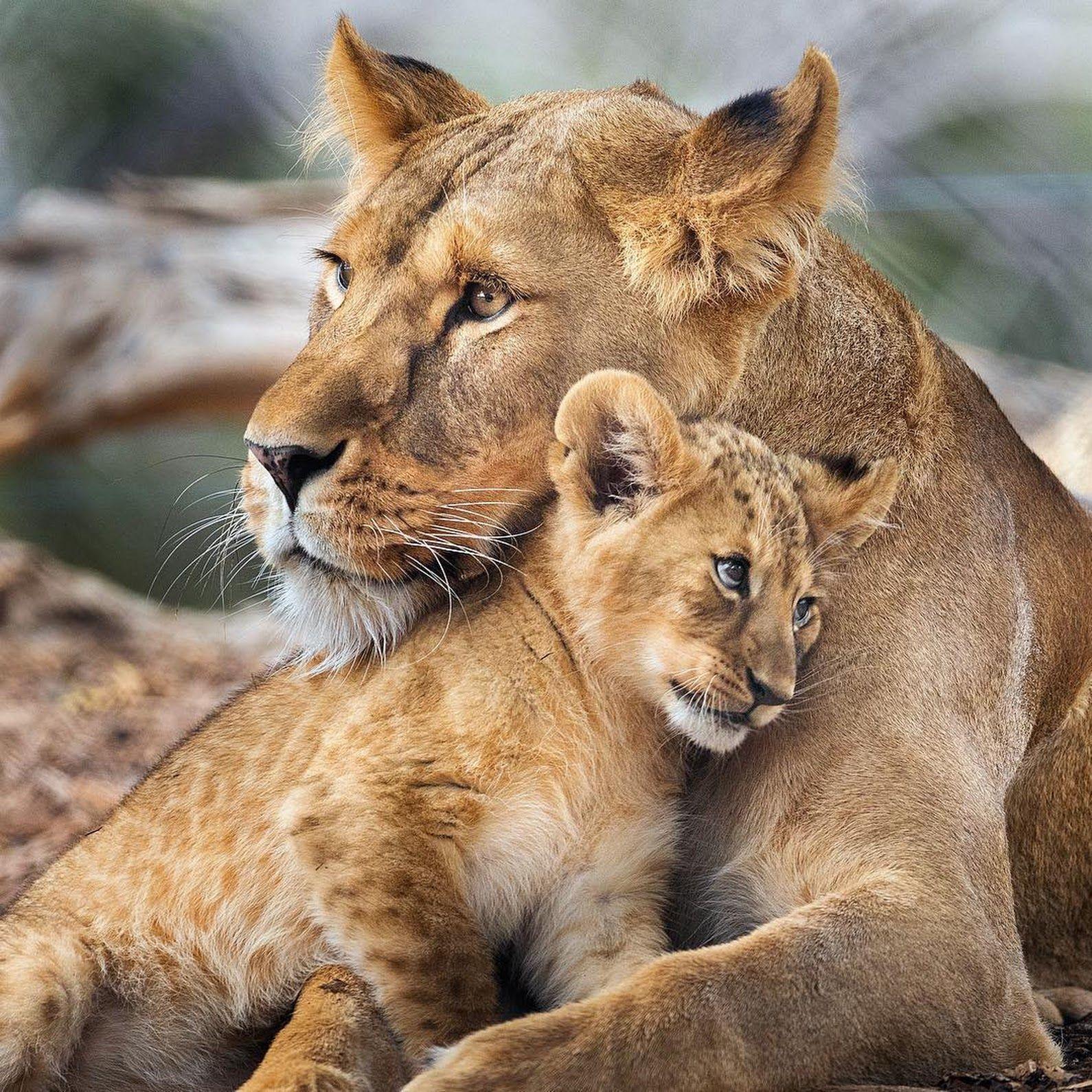 часть книги красивые картинки на аву животные с детенышами верить, что именно