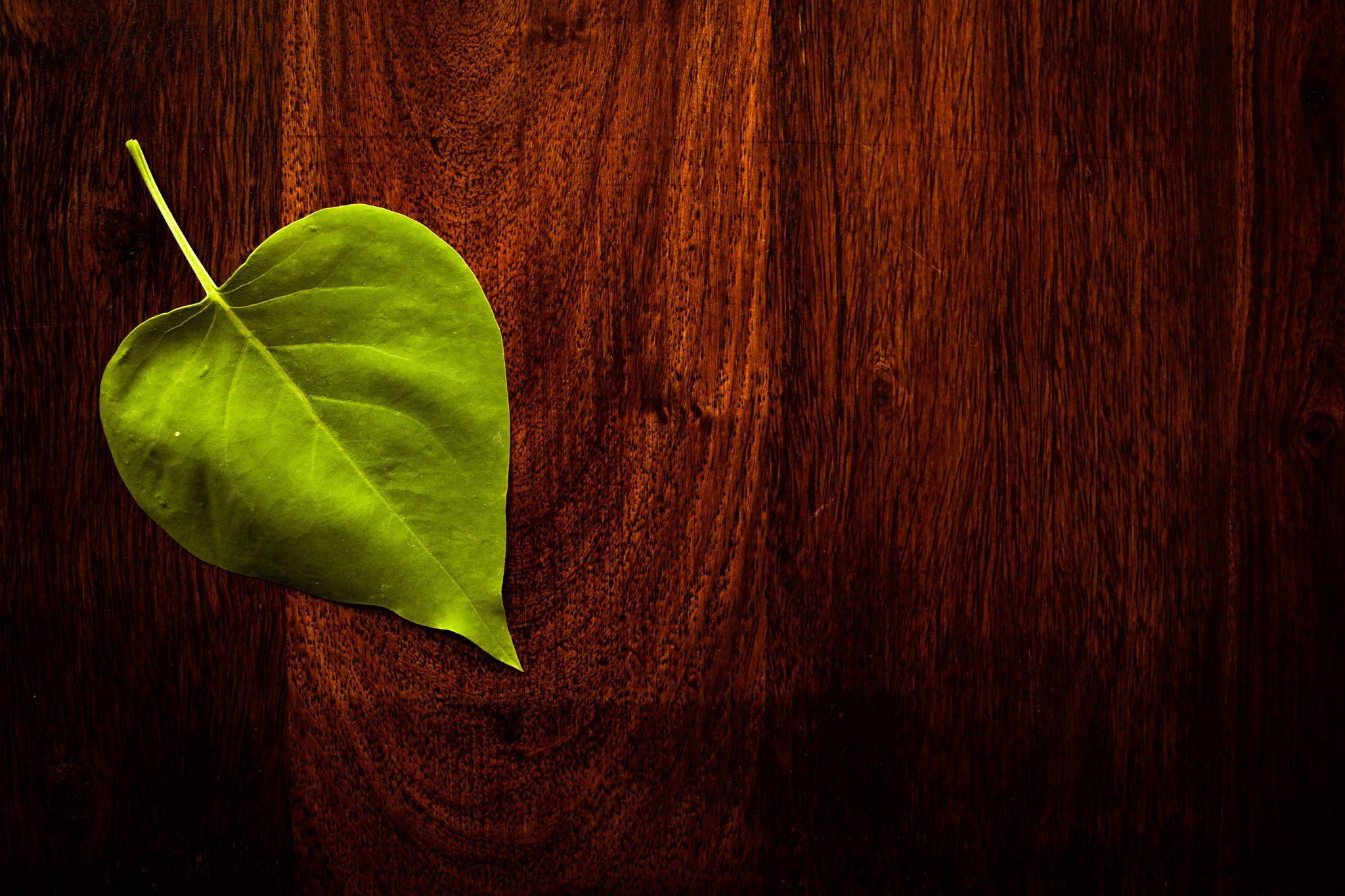 Leaf on wood by Kasper Nymann on 500px