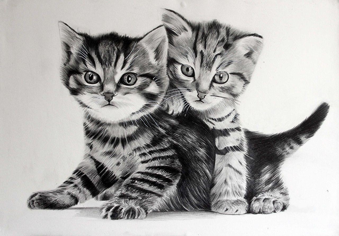 Fotos Katzchen Katze Zwei Schwarzweiss Tiere Gezeichnet