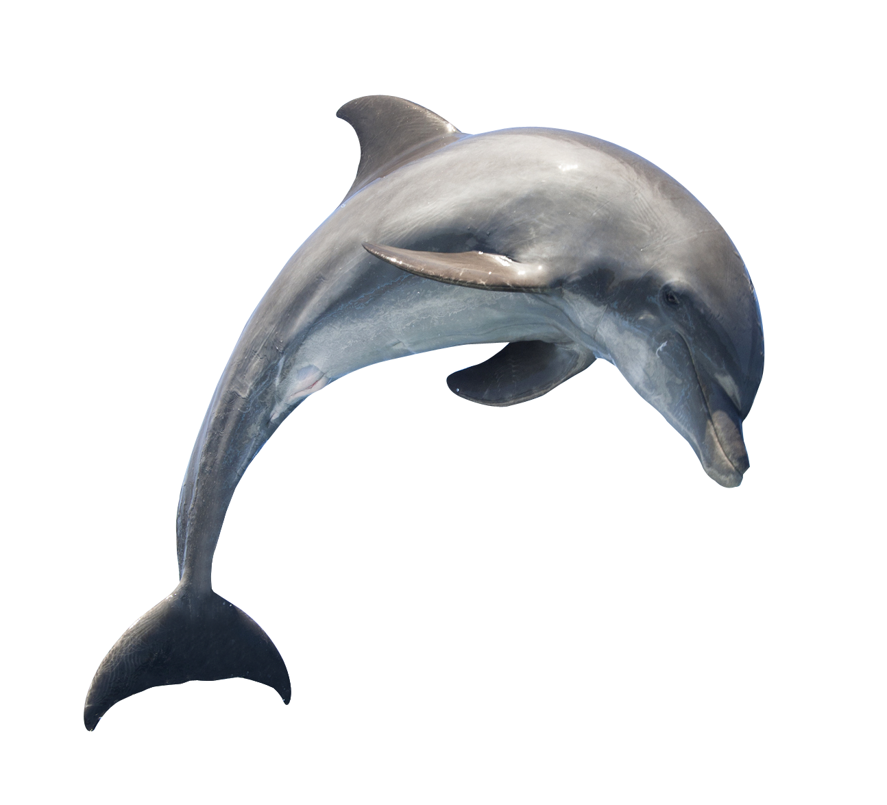 Jumping Dolphin Png Dolphin Logo Png Dolphin Logo Dolphins Whale