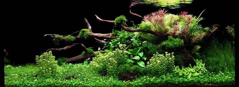 Lots de plantes d 39 aquarium interm diaire paysage for Plante aquarium eau douce