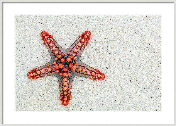 Red Starfish Framed Print featuring the photograph Red Starfish Art - Sand Beach Wall Art Prints - #home #decor #interior #design #ocean #sea #wall #art #wallart #photo #photography #for #sale #buy #online #framed #canvas #framedart #summer #shell #water #colorful #black #white #and #modern #interiors #idea #ideas #print #priints #artprints #artwork #arworks #decoration #wall #walldecor #summer #water #beach #sea #travel #