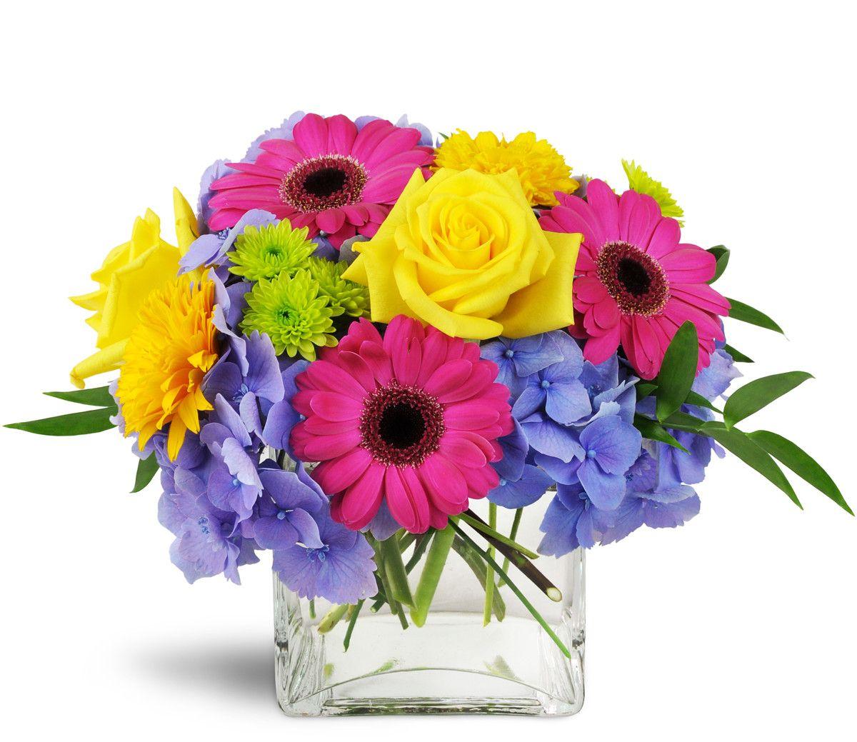Blooming Medley™ Hydrangea colors, Hydrangea purple