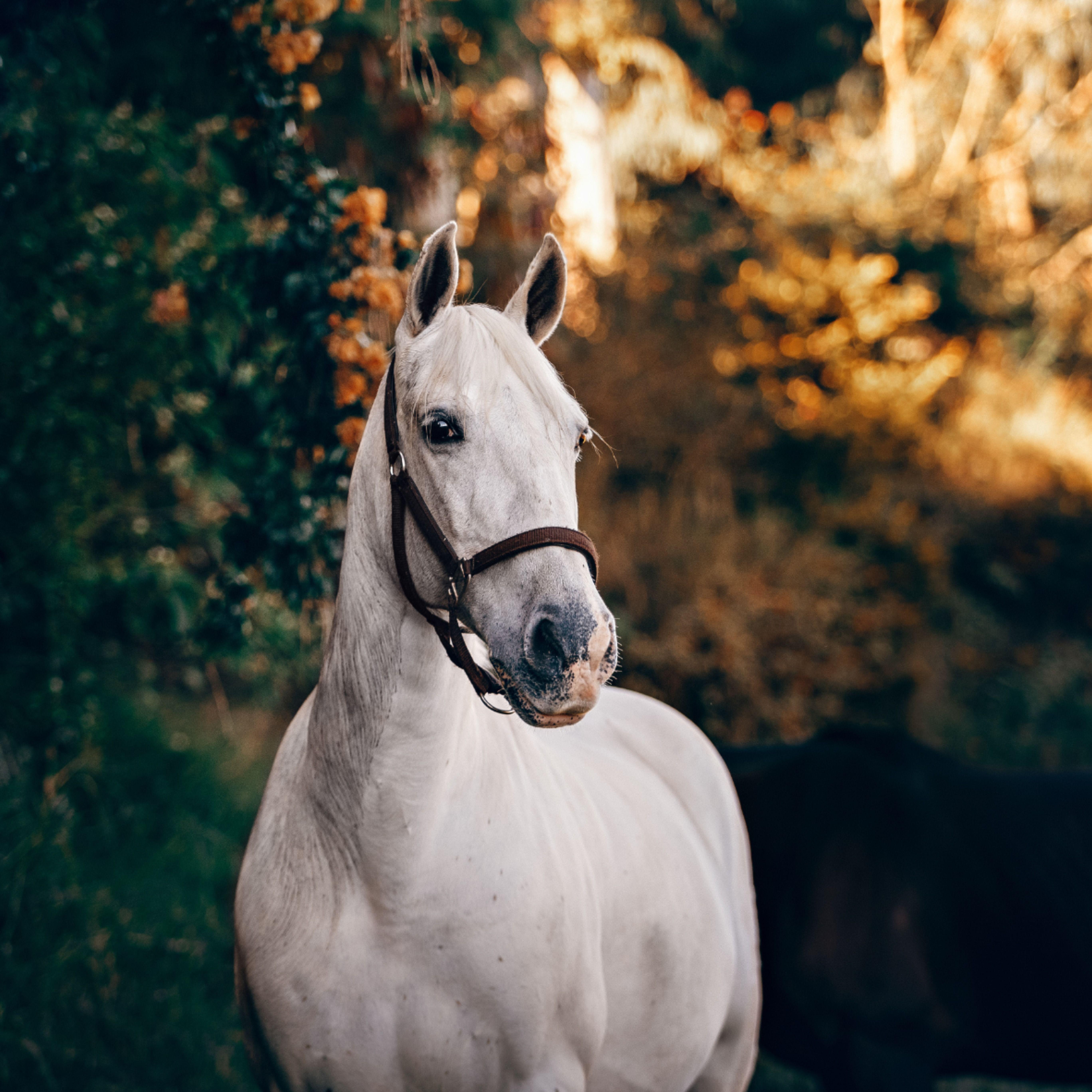 Pin Von Zooroyal Auf Haustiere In 2020 Pferde Schone Pferde Pferd