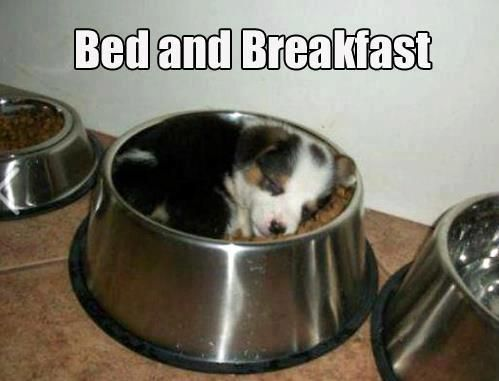 Meme Bed And Breakfast Dog Sleeps In Food Bowl Funny Dog