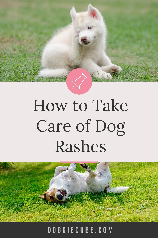 How To Take Care Of Dog Rashes Doggie Cube Dog Rash Rash On Dogs Belly Dog Remedies