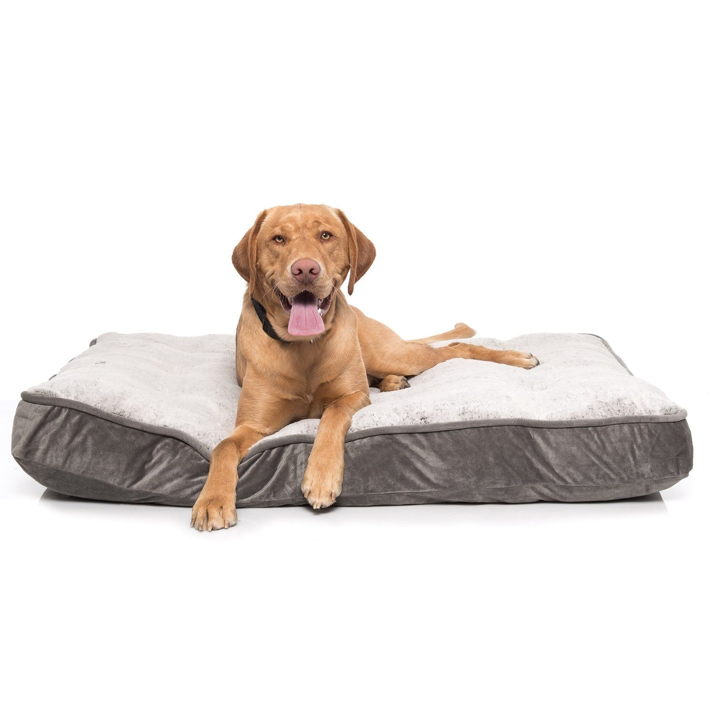 Arlee Ortholux Orthopedic Foam Dog Bed 45x36 Dog Bed Arlee Dogs