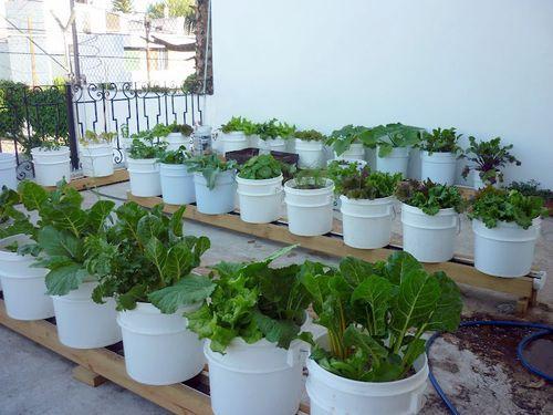 Etonnant Rain Gutter Gardening   Water Conserving, Plant Nurturing, Weed And  Varmint Reducing