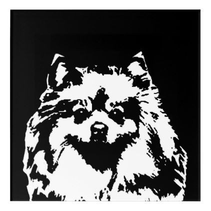 Pomeranian Black White Acrylic Wall Art Zazzle Com Acrylic Wall Art Art Wall Art