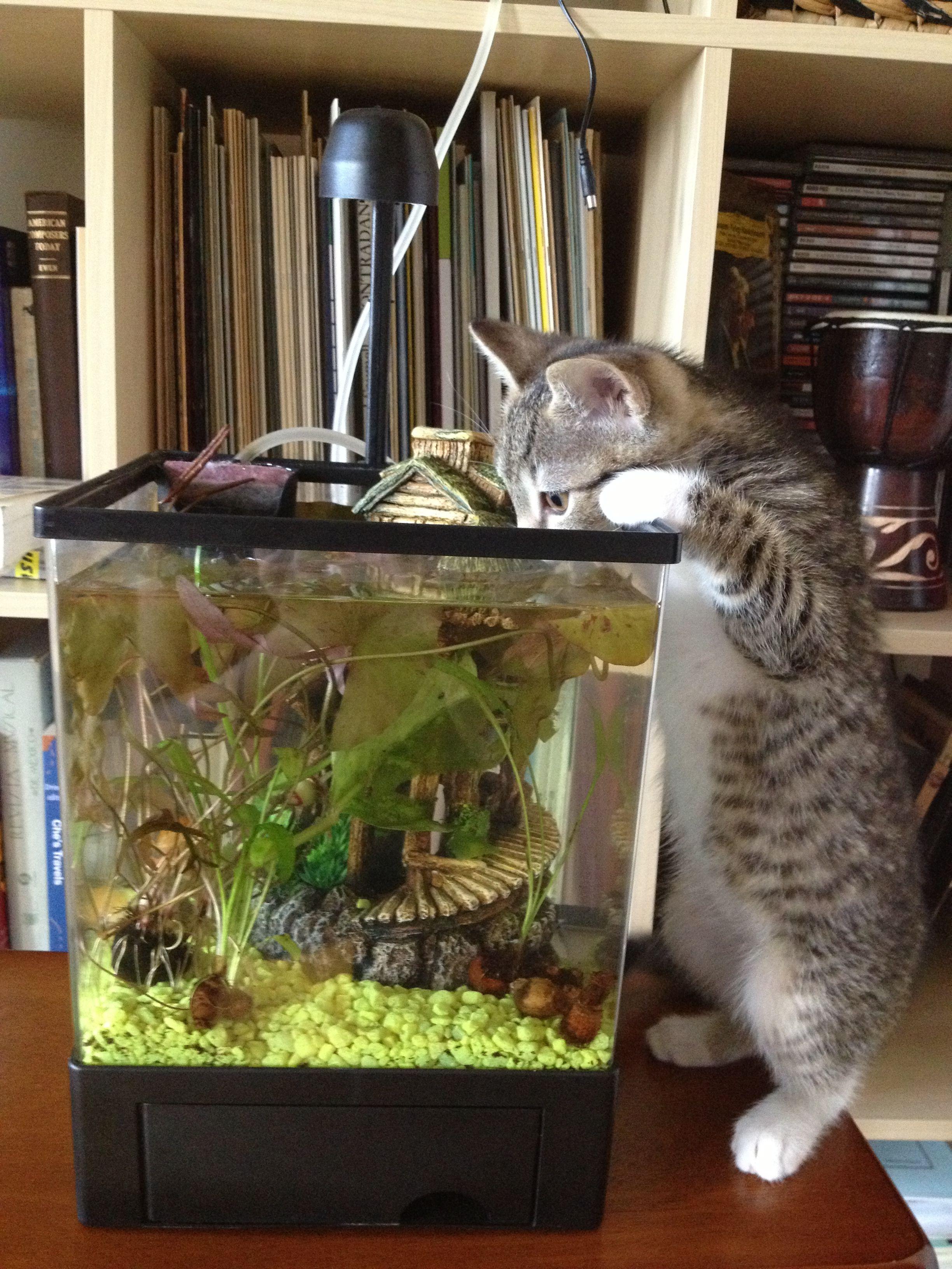 Meemi Kitten And Aquarium Aquarium Cat Boarding Kitten