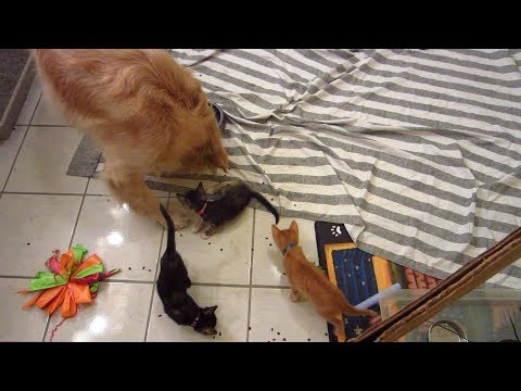 3 Three Little Kittens Annoying Dog While He Eats Spilled Cat
