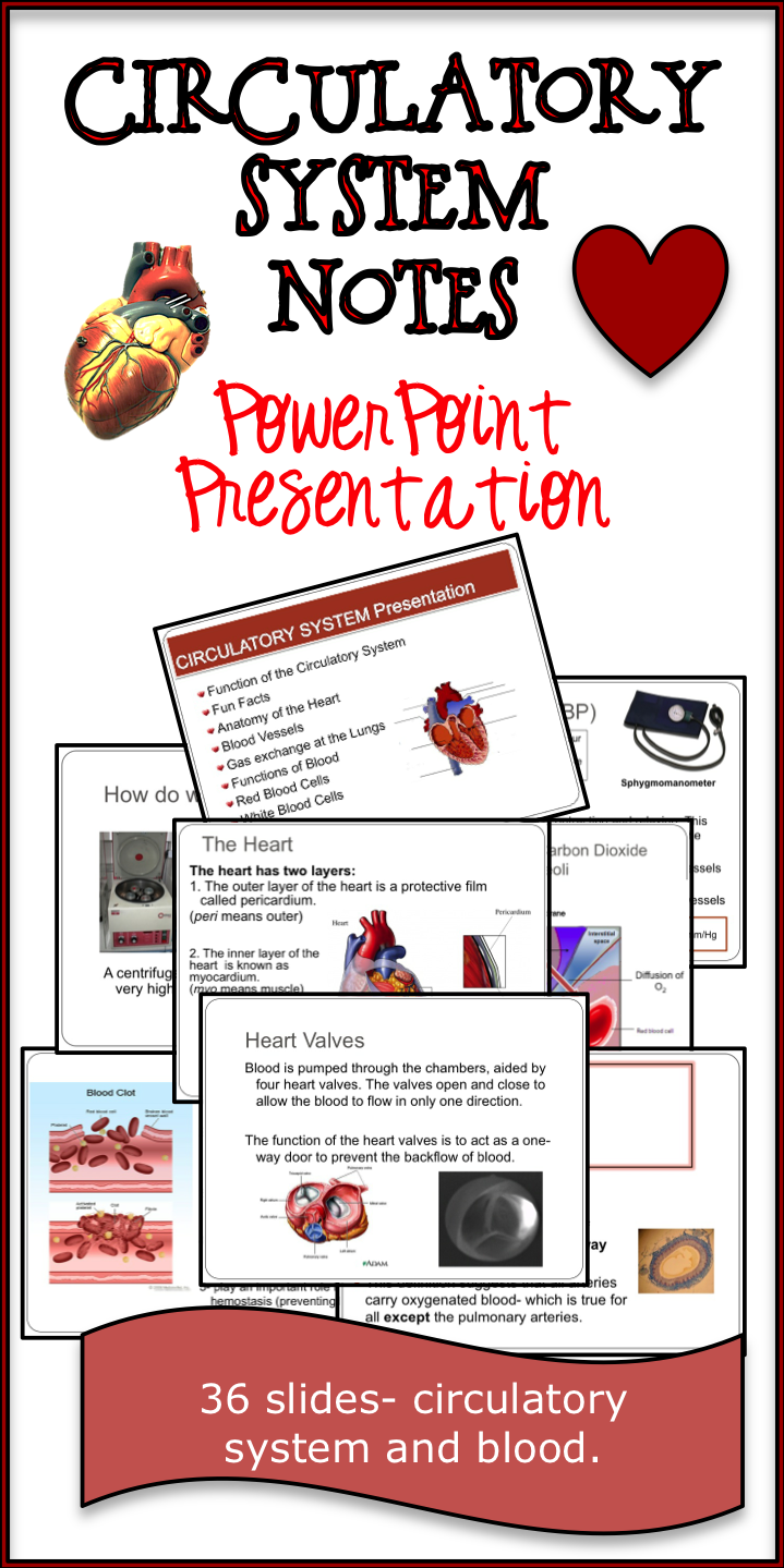 Are you not in love with your current notes on the circulatory system? This 36-slide power point presentation covers the function of the circulatory system, parts of the circulatory system (with heavy emphasis on the heart parts), direction of blood flow, the function of blood, and blood components.