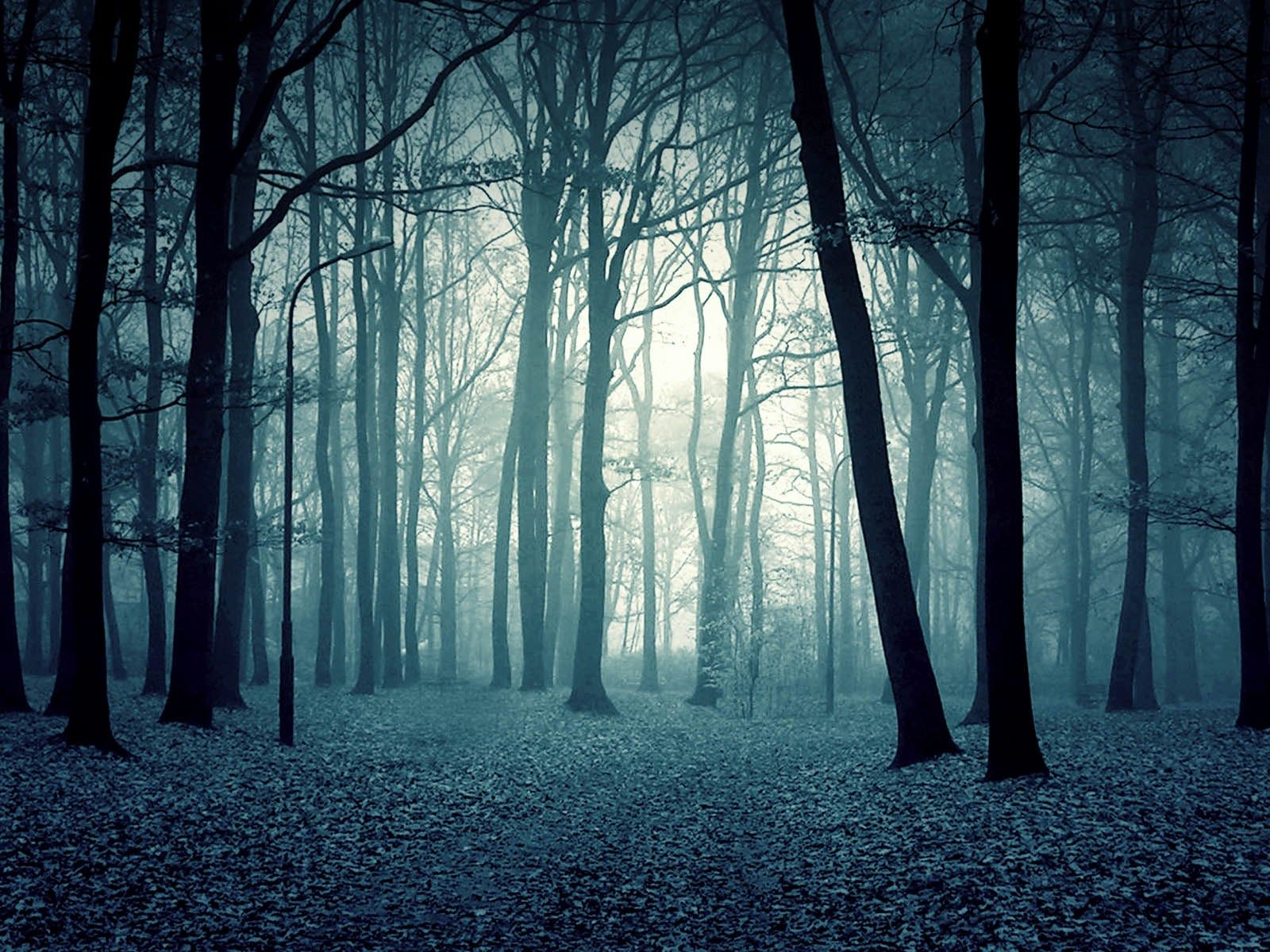 Cool Forest Backgrounds Cool Forest Backgrounds Backgrounds G O
