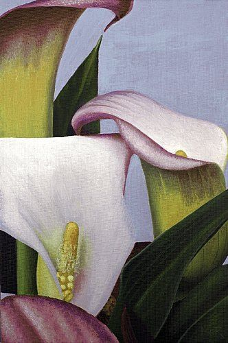 "Dietrich Moravec, ""Pink and yellow callas"" With a click on 'Send as art card', you can send this art work to your friends - for free!"